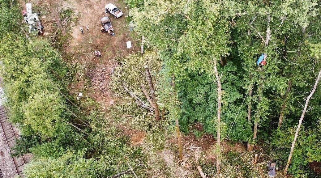 drone view of a clearing in the trees where people are cutting trees