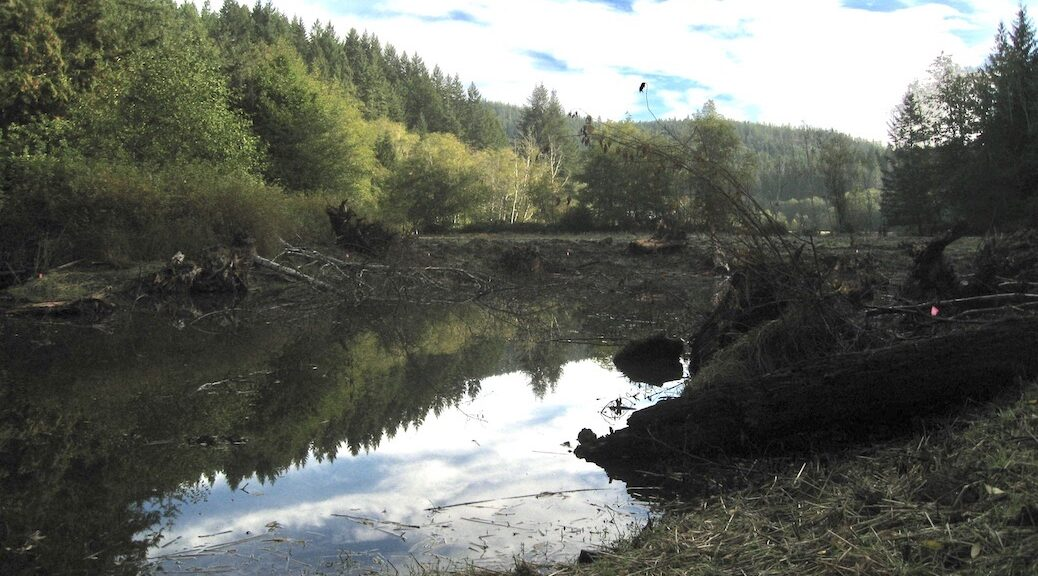 One of the ponds at the Dillon Creek wetlands restoration site