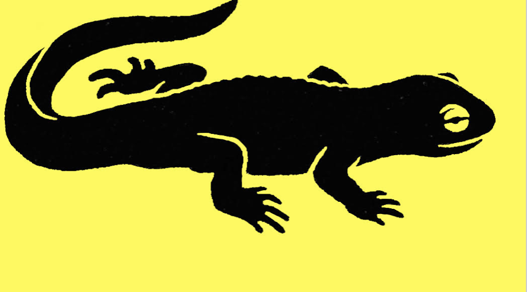 black newt on a yellow background