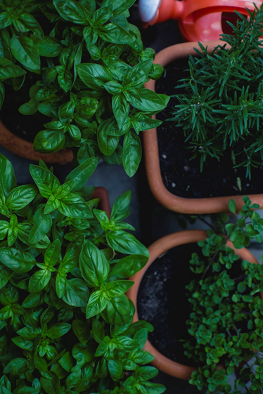 5 Herbs To Grow For A Spa Experience