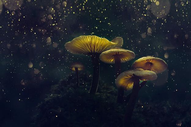 5 Health Benefits Of The Magic Mushrooms