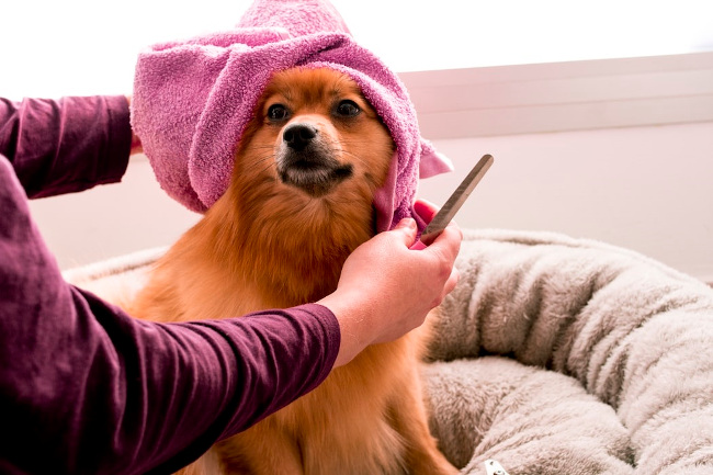 4 Spa and Wellness Trends for Pets