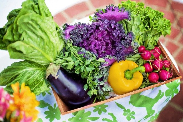 7 Wellness Secrets to Growing Plant Foods at Home
