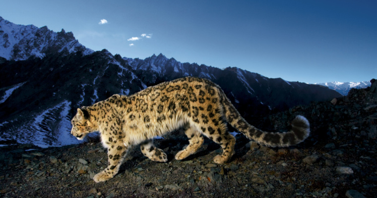 """On the Trail of Big Cats"" with Steve Winter, National Geographic Live!