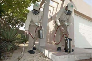 شركة رش مبيدات بحفر الباطن المنطقة بساط الريحية