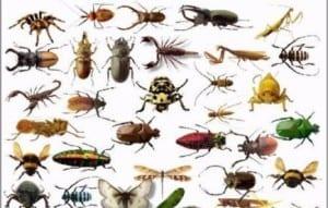 حشرات المنزل الزاحفة بجدة