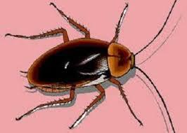 كيفية التخلص من الحشرات في الحمام بجدة