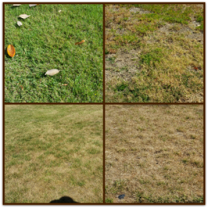 How green is your grass collage 300x300 - Water conservation and lawn blonding: most neighbors get it