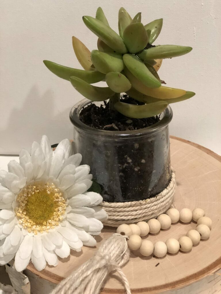Succulents container made out of Oui yogurt jars. Re-use, Recycle oui yogurt jars