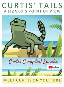 An illustration of a curly-tail lizard named Curtis