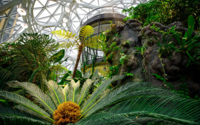 The Spheres Blossom at Amazon's Urban HQ in Seattle