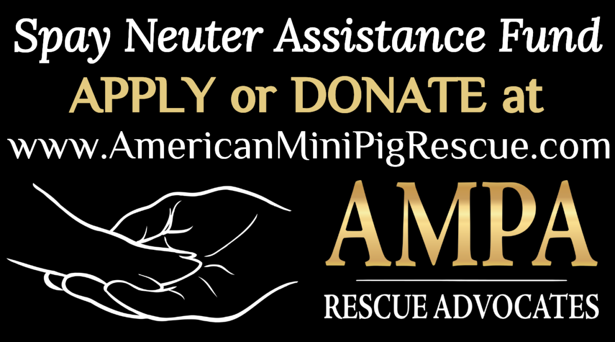 spay neuter assistance