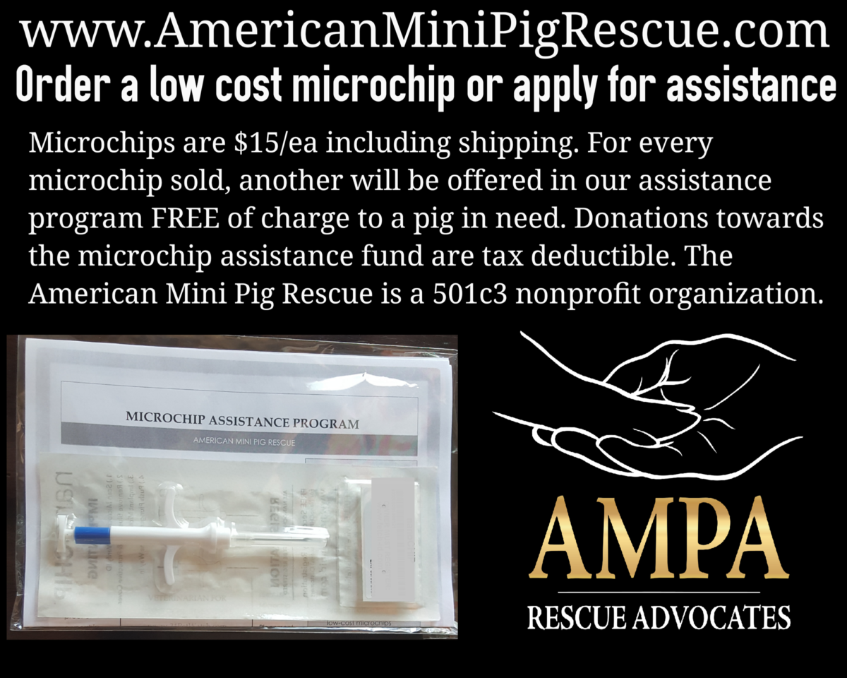 mini pig microchip assistance