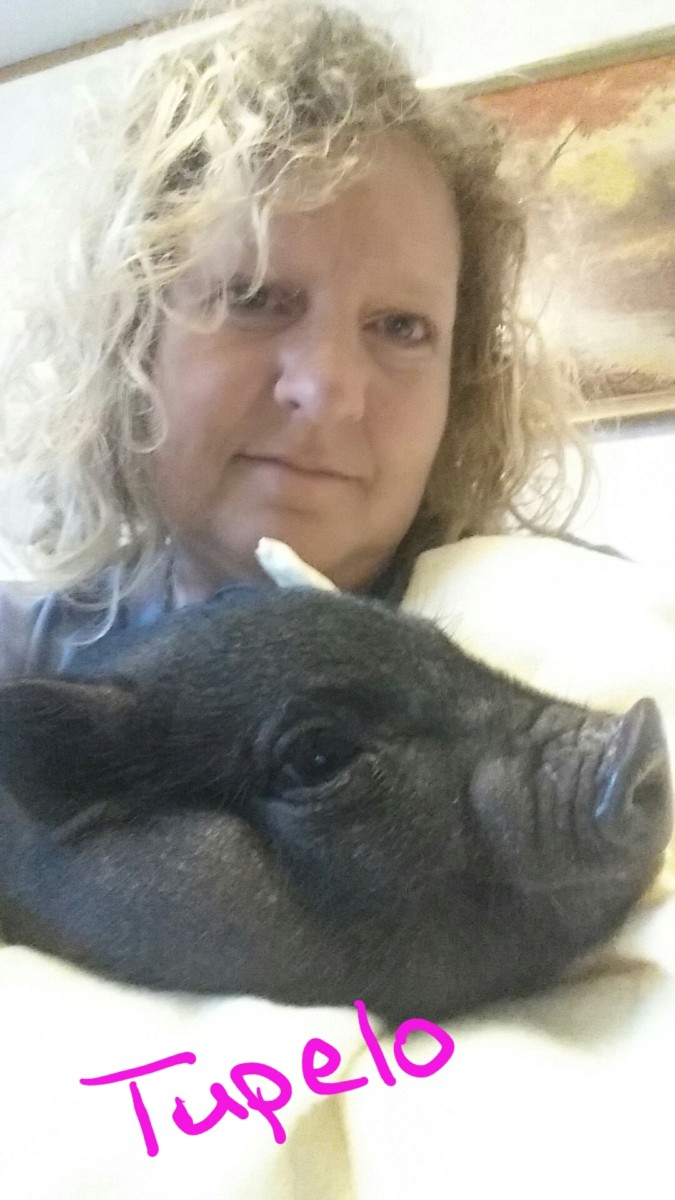 All Things AG Farms Rescue and Sanctuary