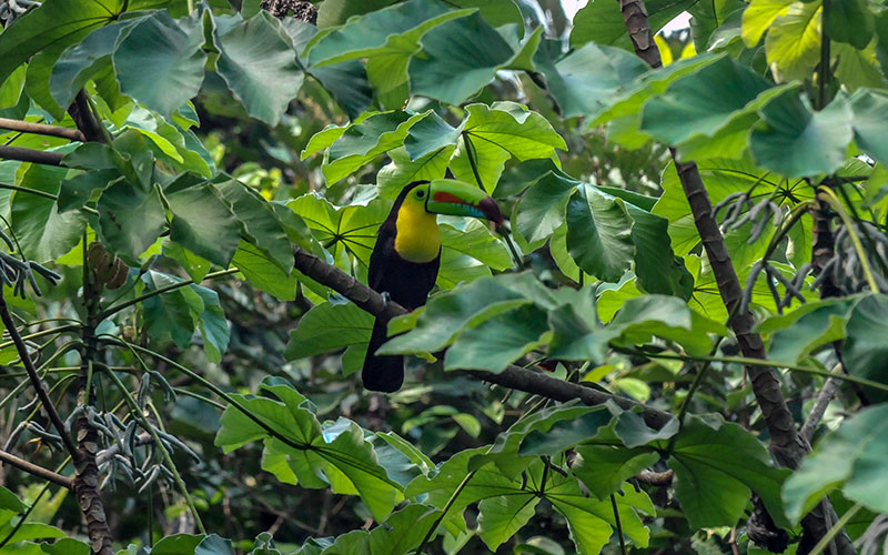 Toucan perched on tree branch in forest