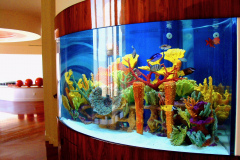 aquariums-san-diego-best-fish-store