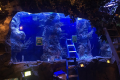 commercial-aquarium-san-diego-ca-custom-aquariums-maintenance