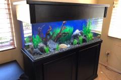 residential-fish-tank-san-diego-black-standalone-aquarium