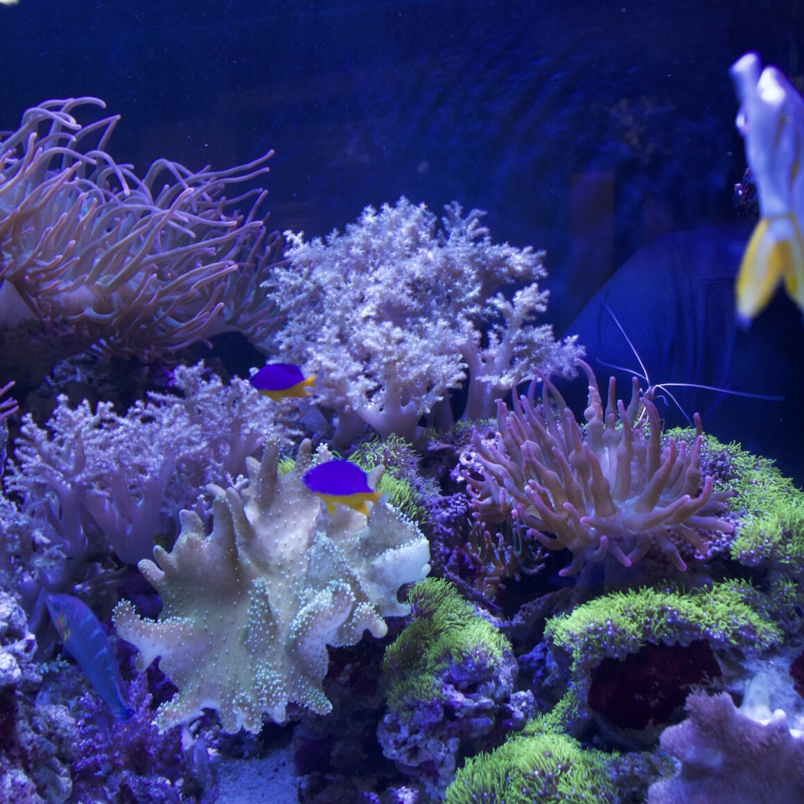 100 gallon fish tank with coral and fish