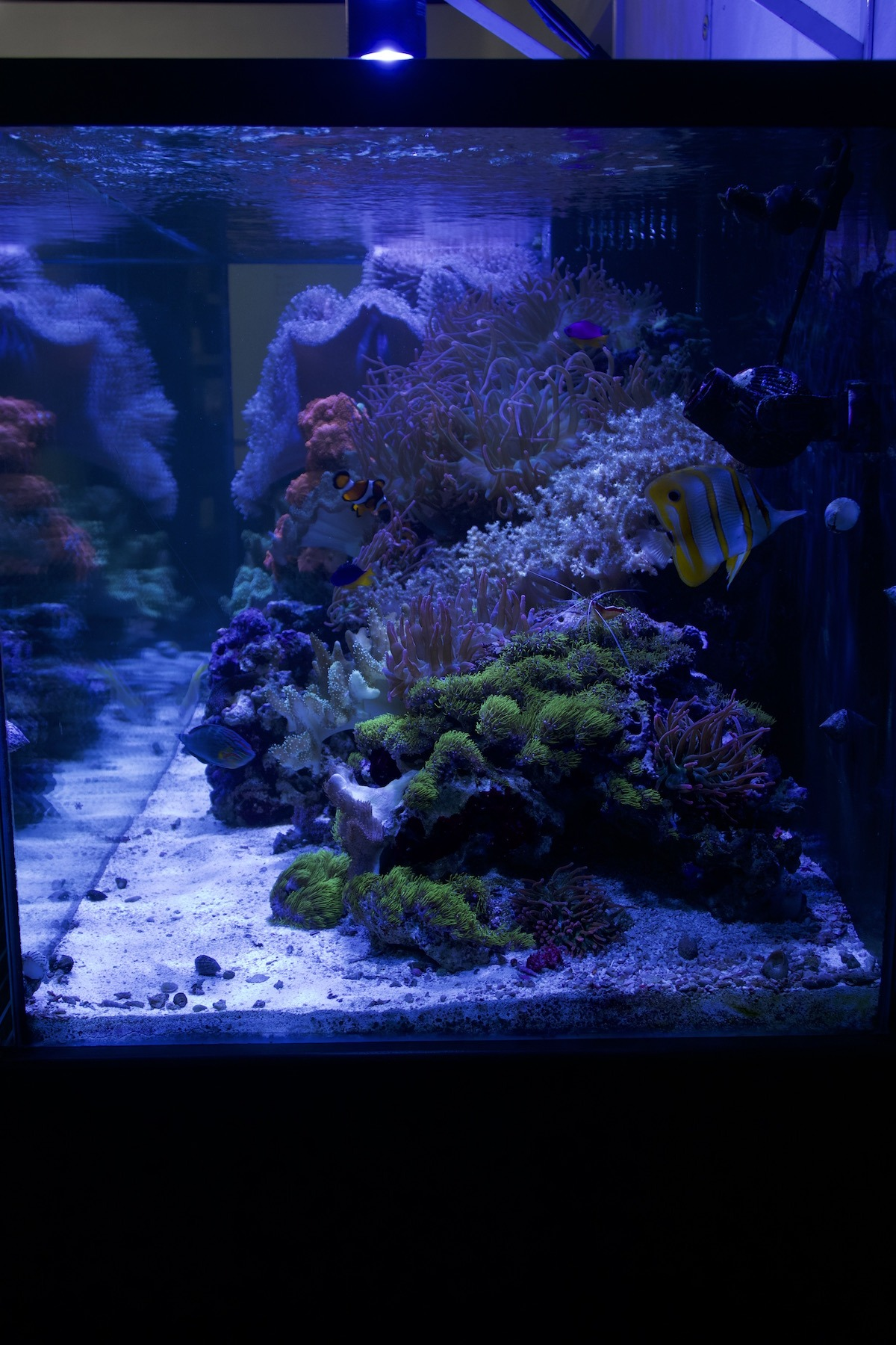 acrylic aquarium with saltwater coral reef