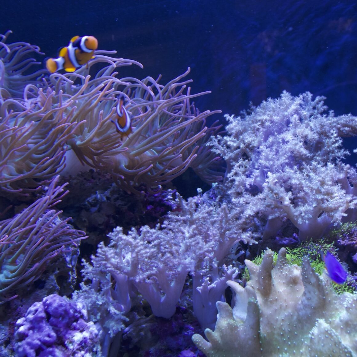 aquarium shop san diego with coral reef and clown fish
