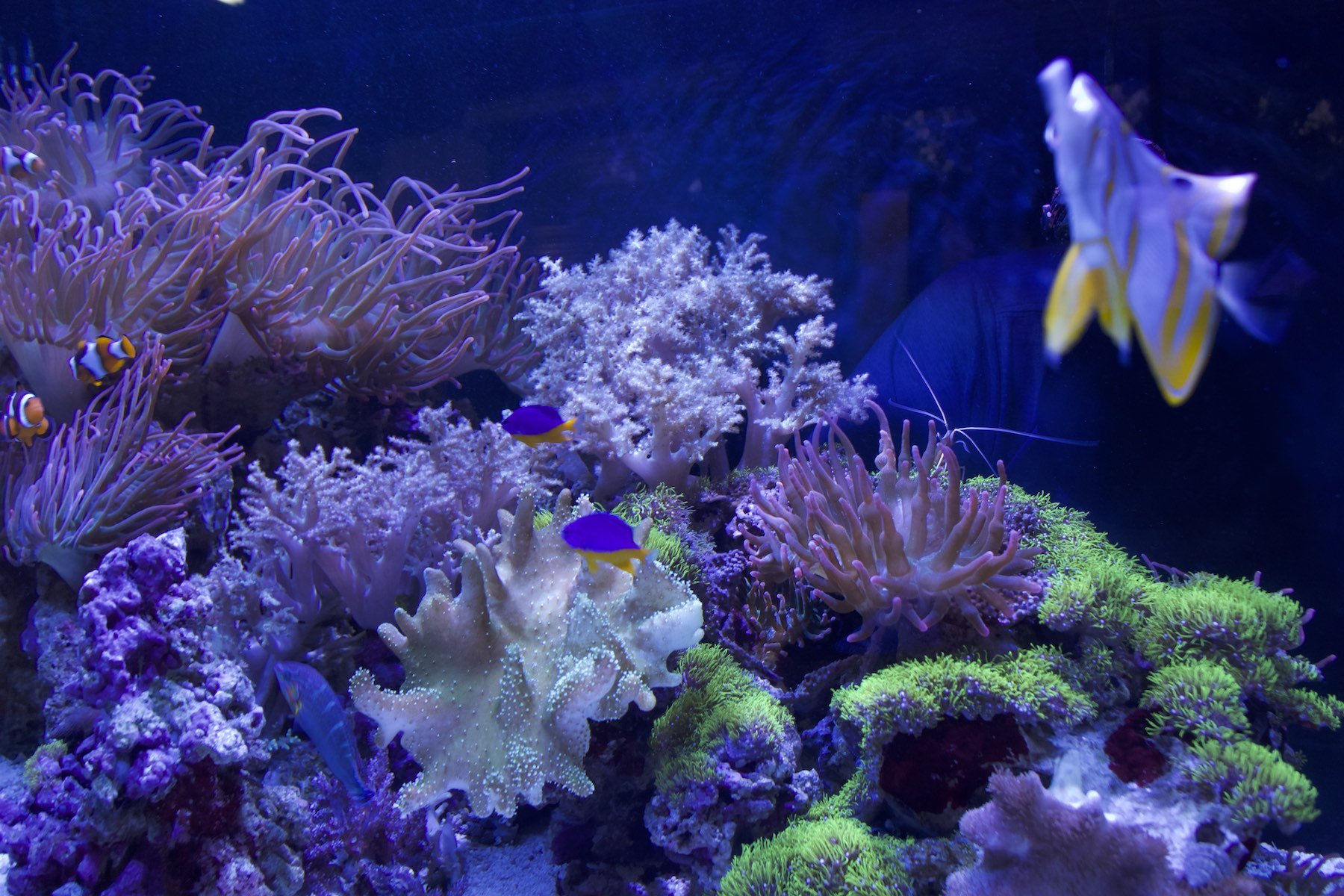 custom fish tank with various fish and coral