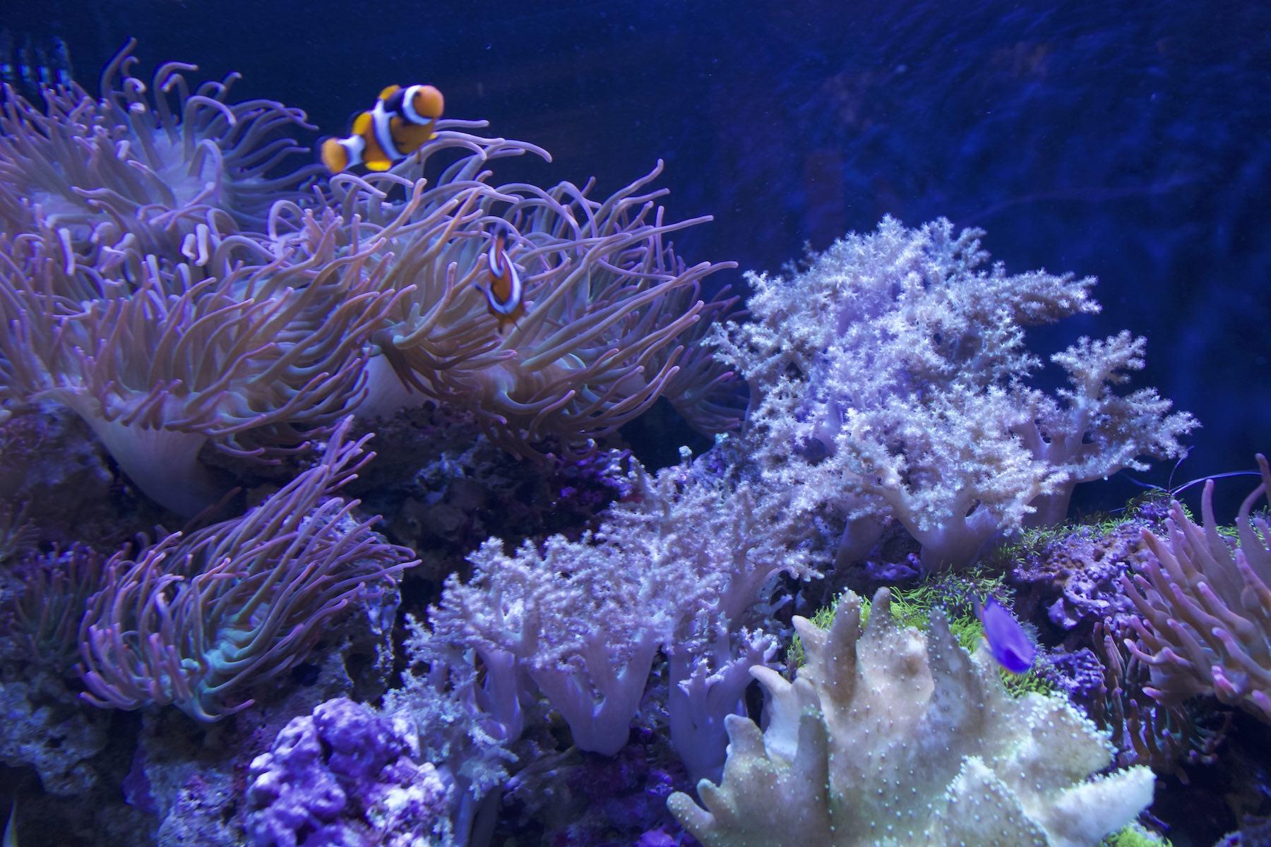 fish aquarium with assorted coral and aquatic life