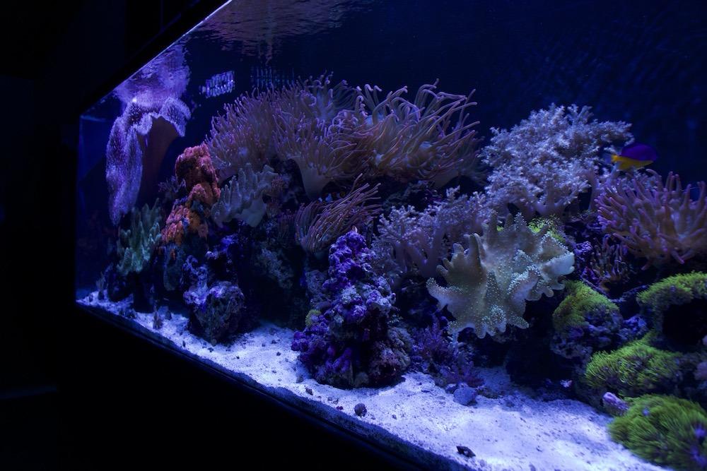 fish tank san diego aquarium with coral reefs
