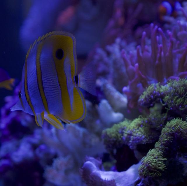 aquarium cleaning services