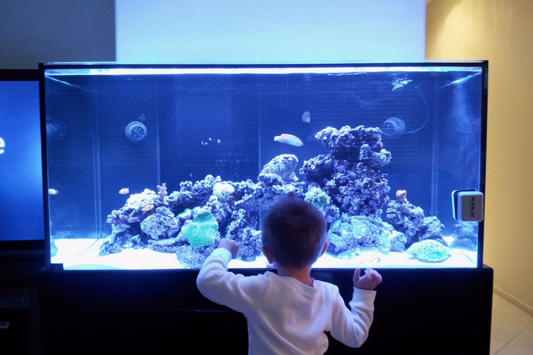 aquarium glass with child looking into fish tank