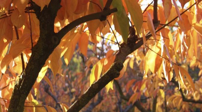 AEP Autumn