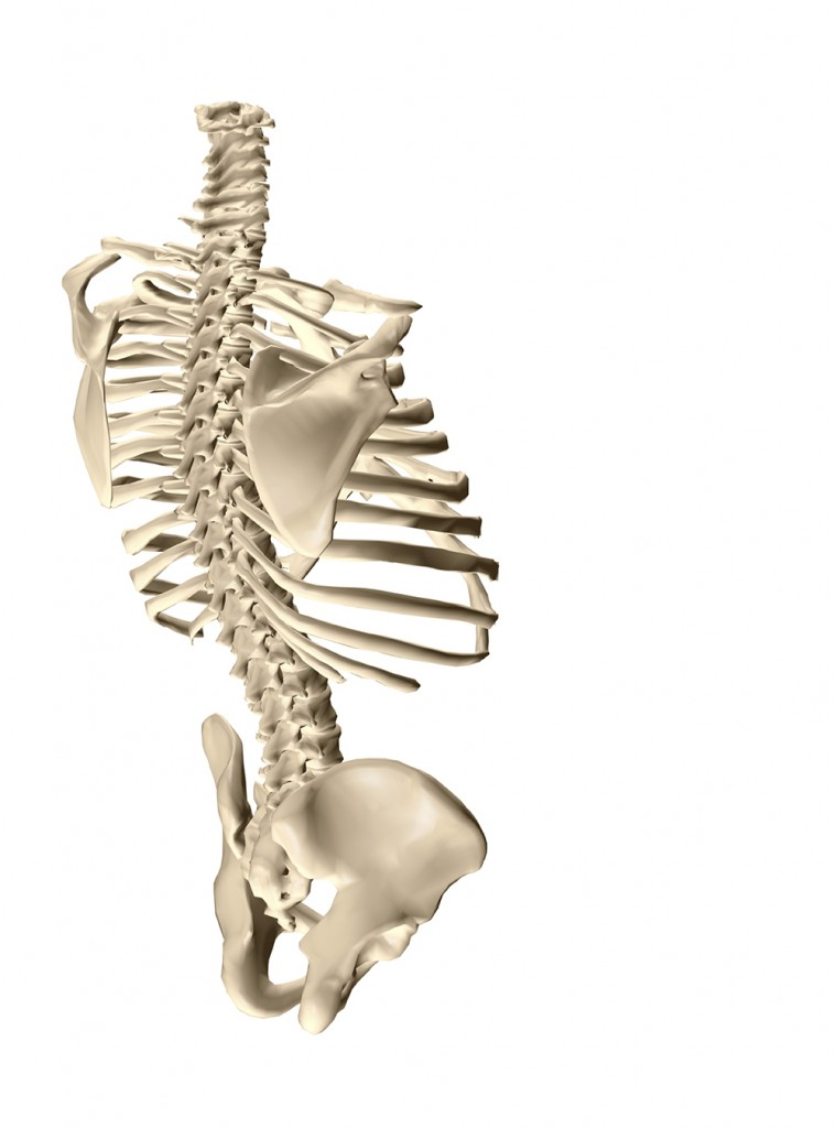 Most Common Spinal Deformity