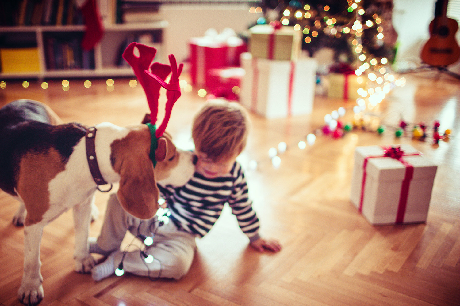 Christmas Trees and Your Pets