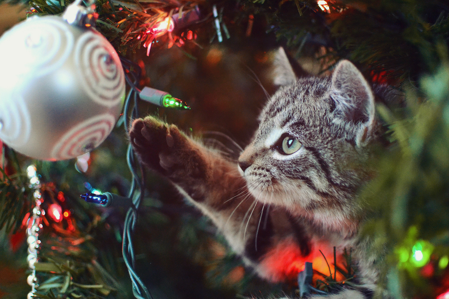 Curious Kittens and Ornaments