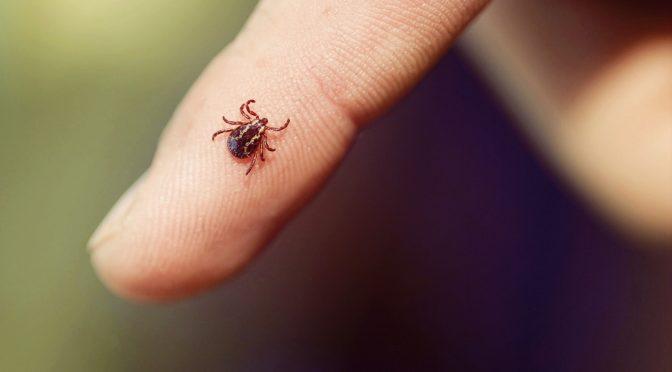 National Lyme Disease Awareness Month