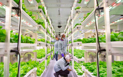 Clean Greens: How Vertical Roots is responding to the global pandemic