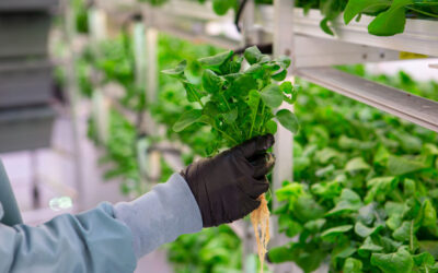 The What and Why of Hydroponic Farming