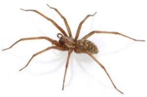 Spider Control for Scottsdale Homes