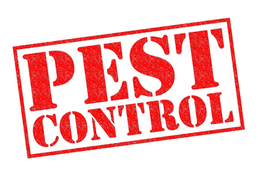 Arizona Pest Control vs Prevention