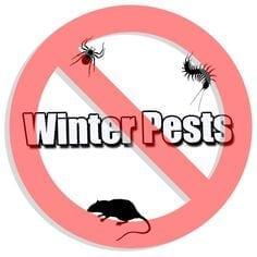 Winter Pests 101