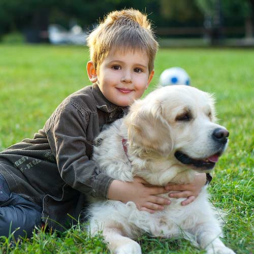 Pet and Kid Friendly Pest Control in Fountain Hills
