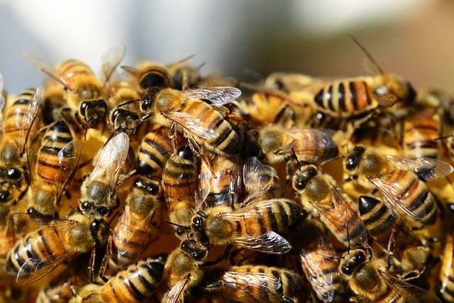 Proper Bee Removal in Scottsdale