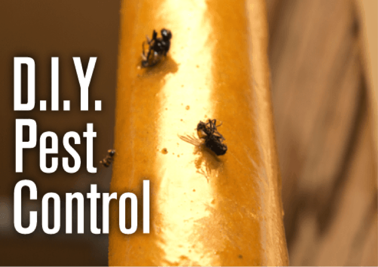 9 Do It Yourself Pest Control Tips for Cave Creek Homes