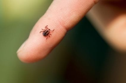How to Remove a Tick from Your Child: A Guide for Parents