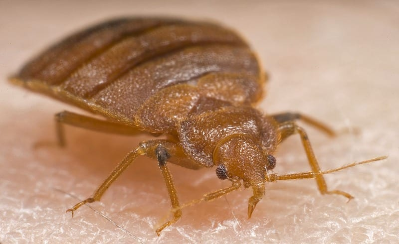 Detect Bed Bugs