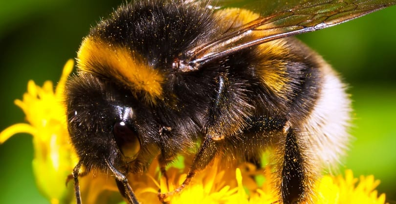 Household Plants that Attract Bees