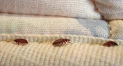 10 Ways to Keep Bed Bugs out of your Glendale home