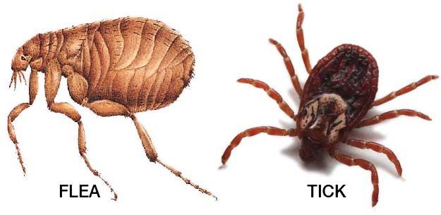 Flea & Tick Pest Control