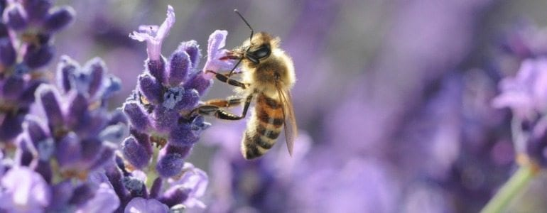 Bee Control Tips & Removal in Queen Creek