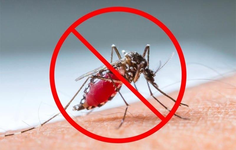 Prevent Mosquito Bites